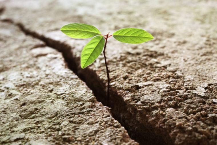 Wachsende Pflanze Shiatsu und Shin Tai Bern